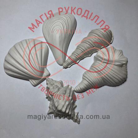 Гіпсоформа морська мушля середня