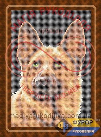 Схема для вишивання бісером картина - ЖБп4-6-1 Німецька вівчарка